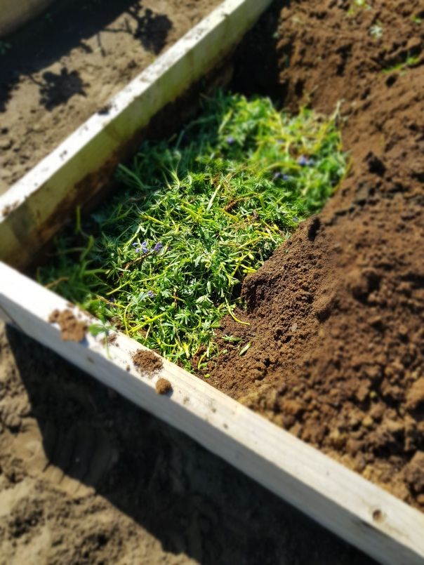 Burying cover crops