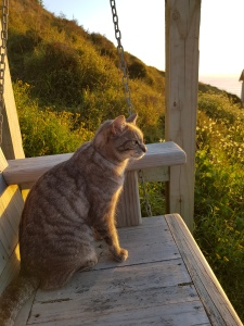 Swing seat with Fennel the Cat
