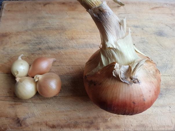 Pukekohe Longkeeper vs pickling onions