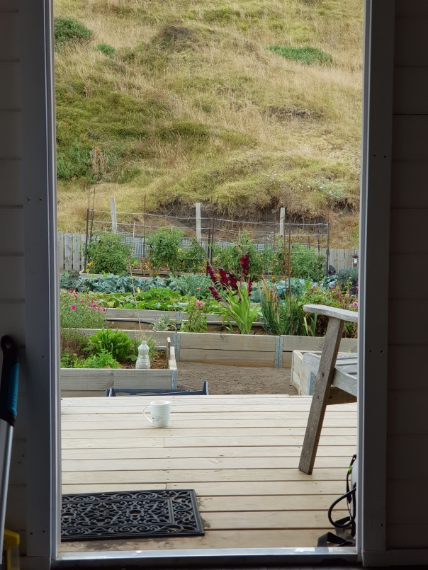 Garden view from the shed