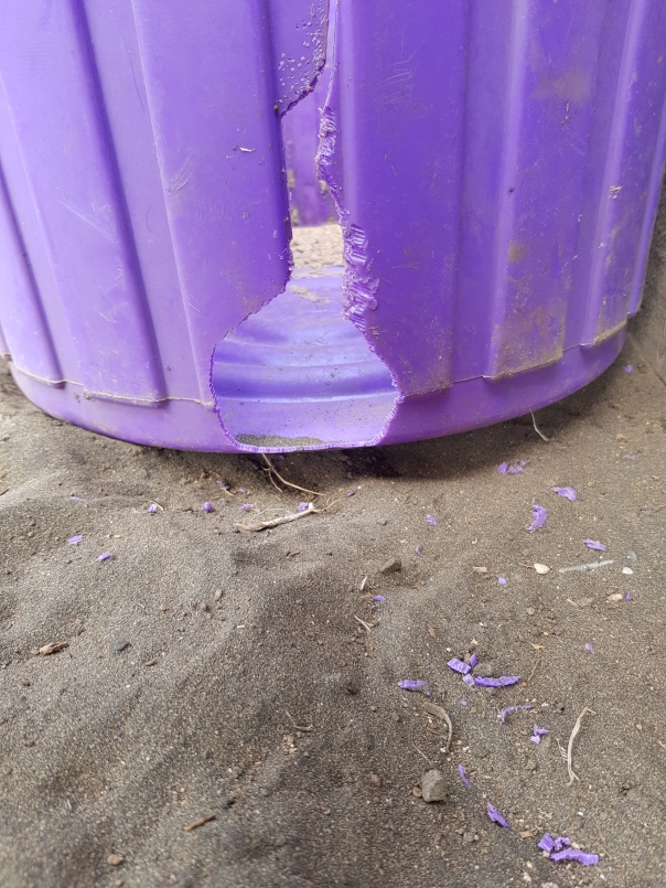 Rat chewed goat food bin