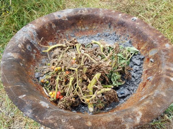 burn or trash diseased material