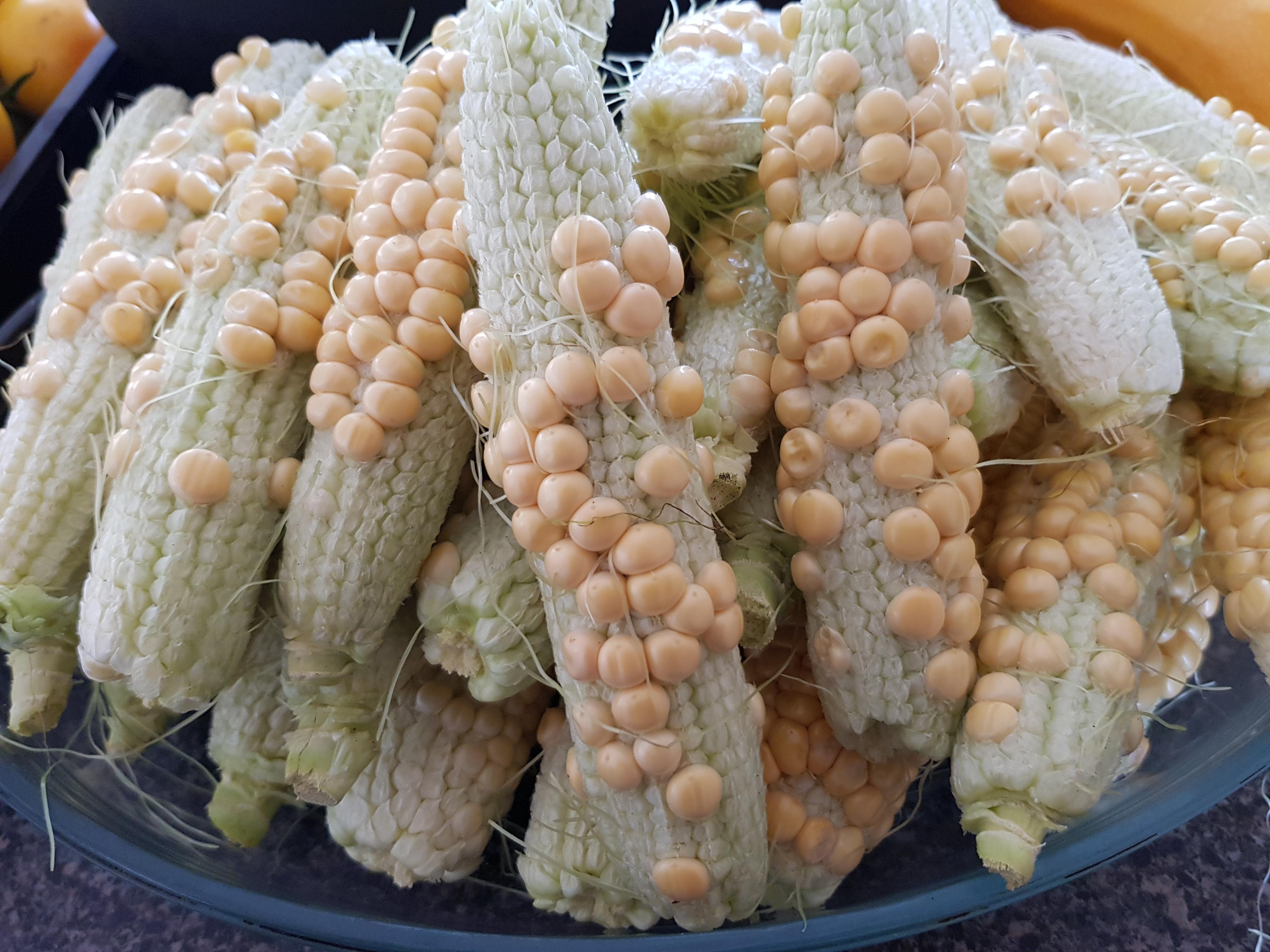 Poor corn pollination