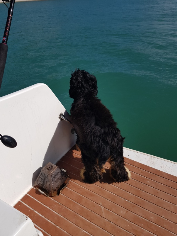 Jasper the Dog out on the water