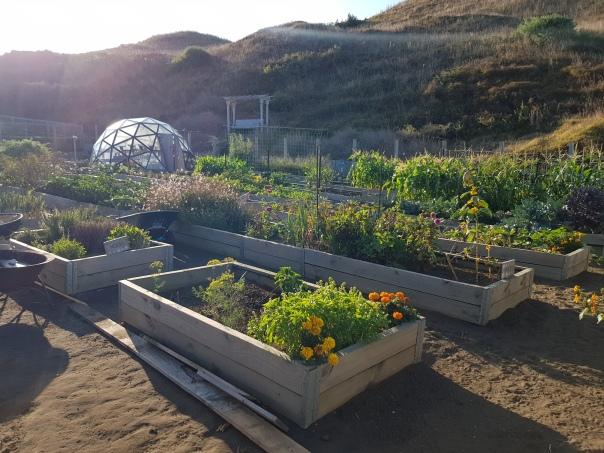 Garden in the morning sun