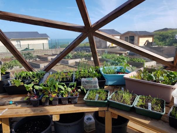 cool season seedlings
