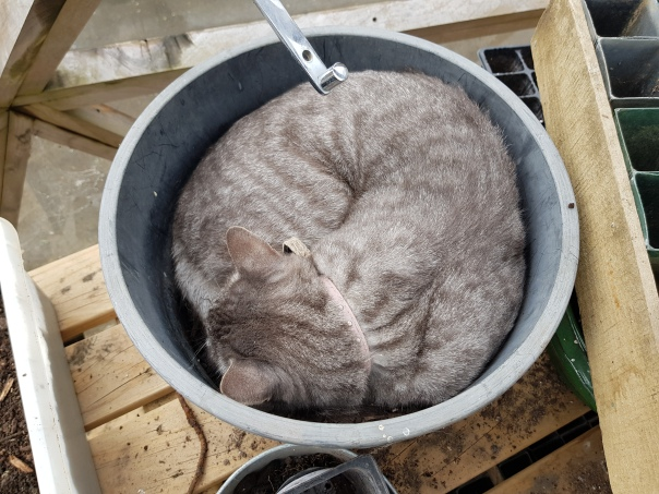 Fennel the Cat in a plant pot