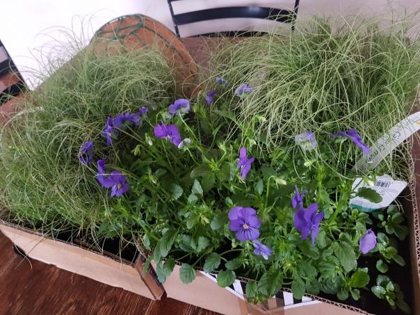 Garden centre purchases