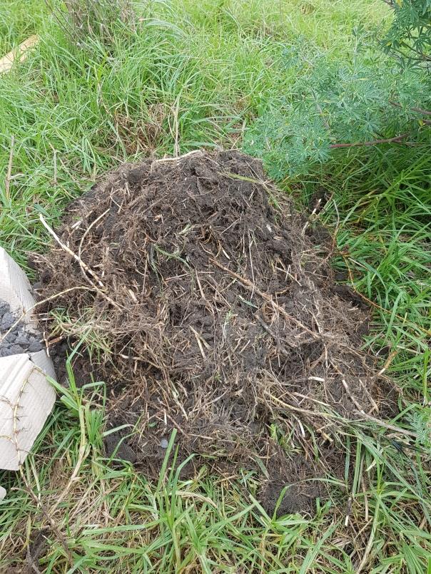 Kikuyu roots