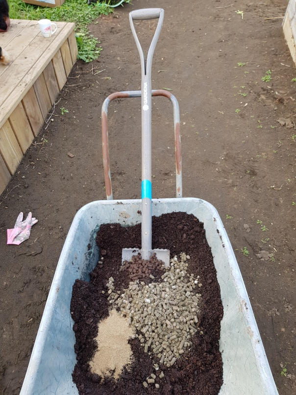 compost and nutrients for asparagus