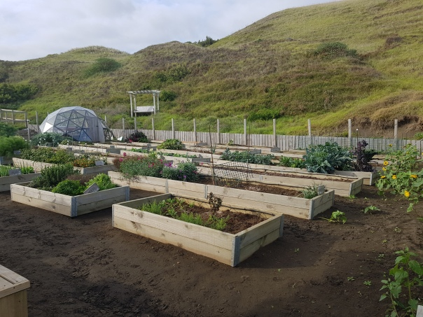 Sorted garden