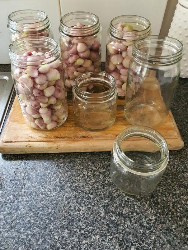 pickling shallots