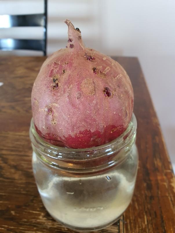Kumara sweet potato