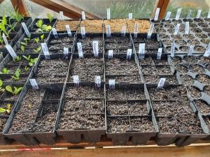 seeds sown