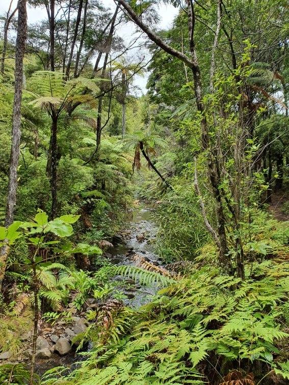 Stream in NZ Bush