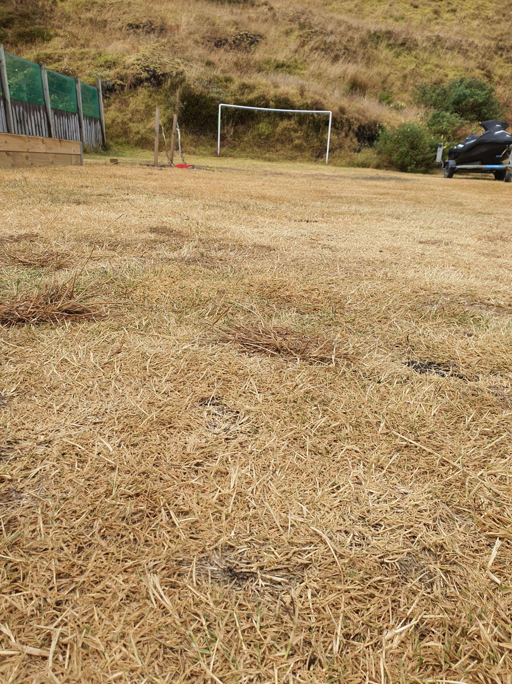 dry summer grass