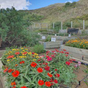 Windswept garden spot