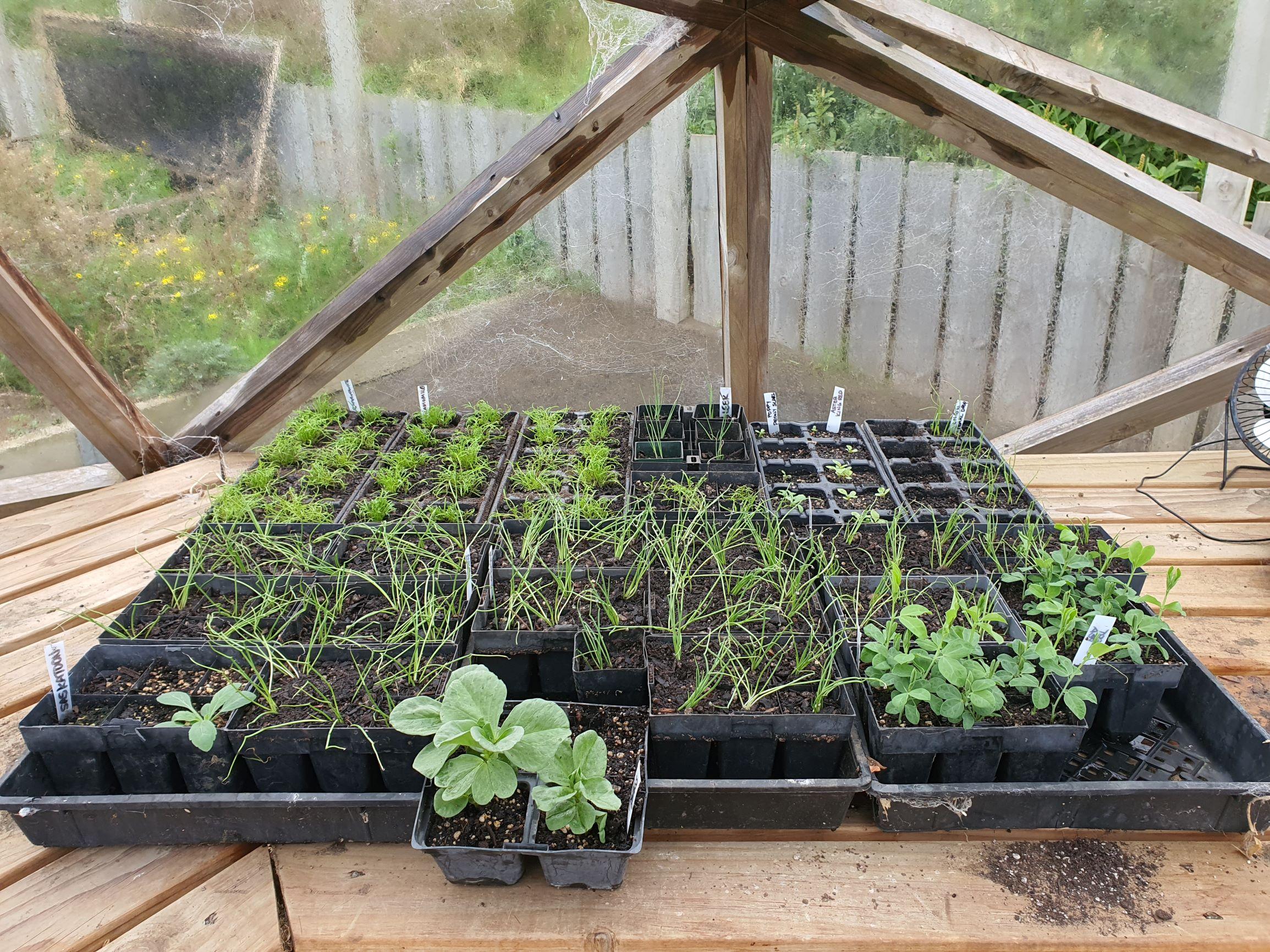 autumn seedlings