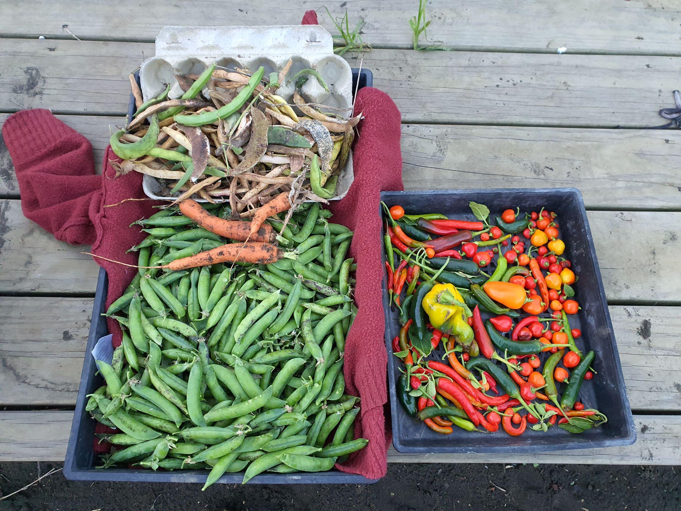 Late autumn to harvest