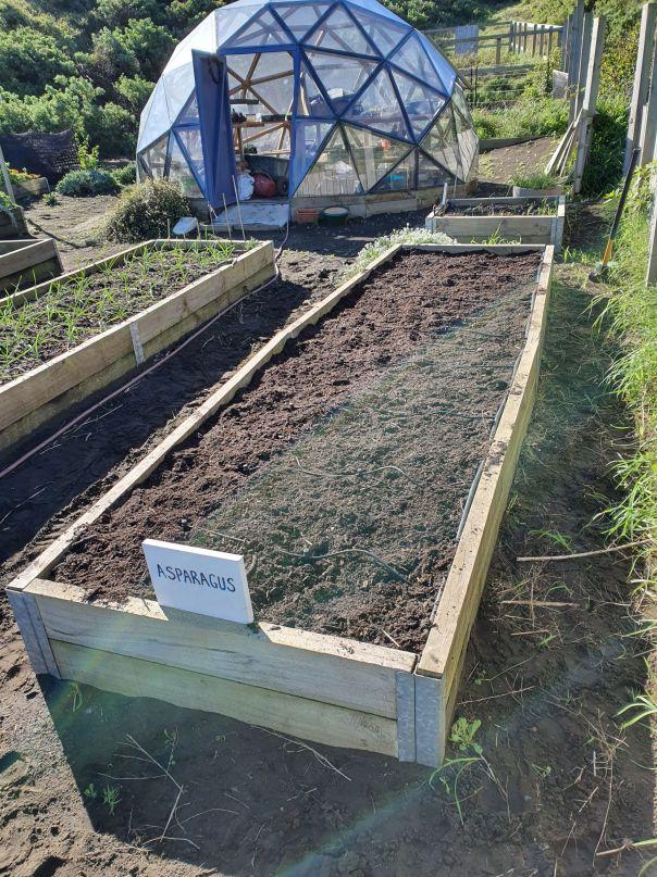 Spring ready asparagus bed