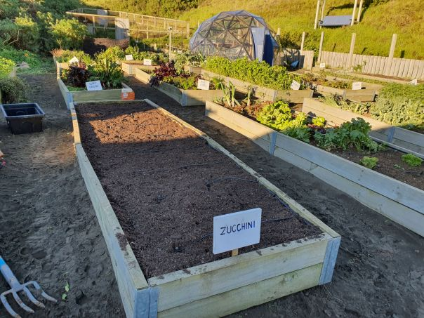 Pepper bed ready for zucchinis