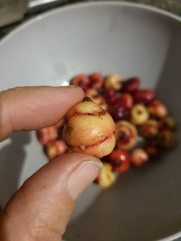 Yam harvest