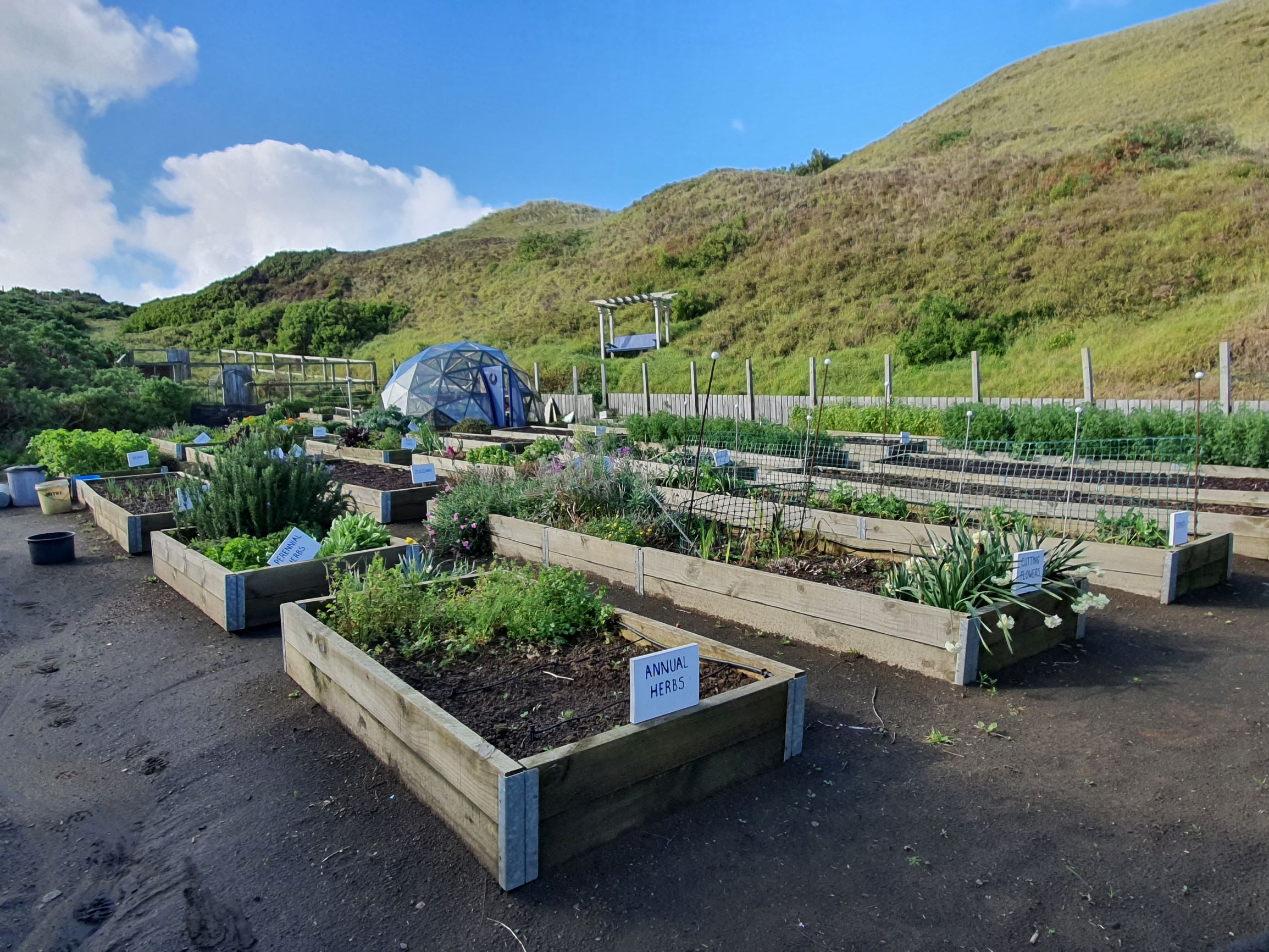 The vegie garden