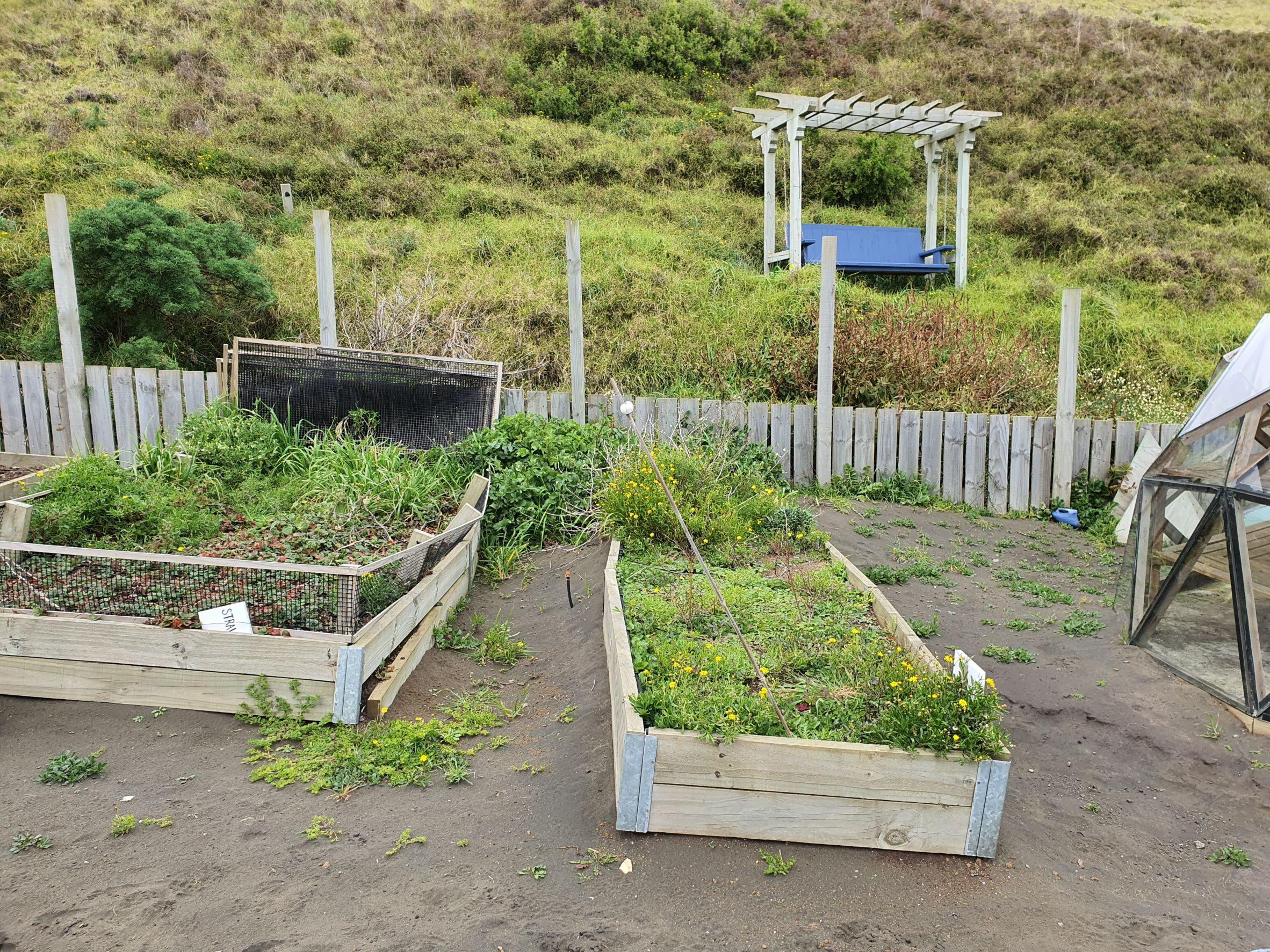 garden area in need of maintenance