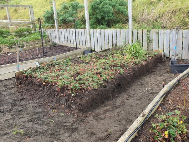 Repairing the strawberry bed